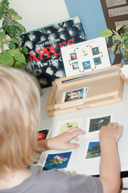 Create a sensory rich apple learning station
