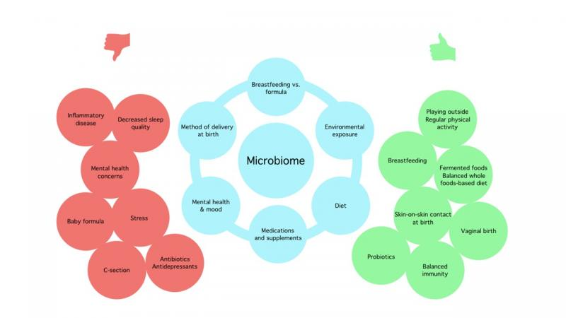 Chart showing lifestyle factors affecting the microbiome.