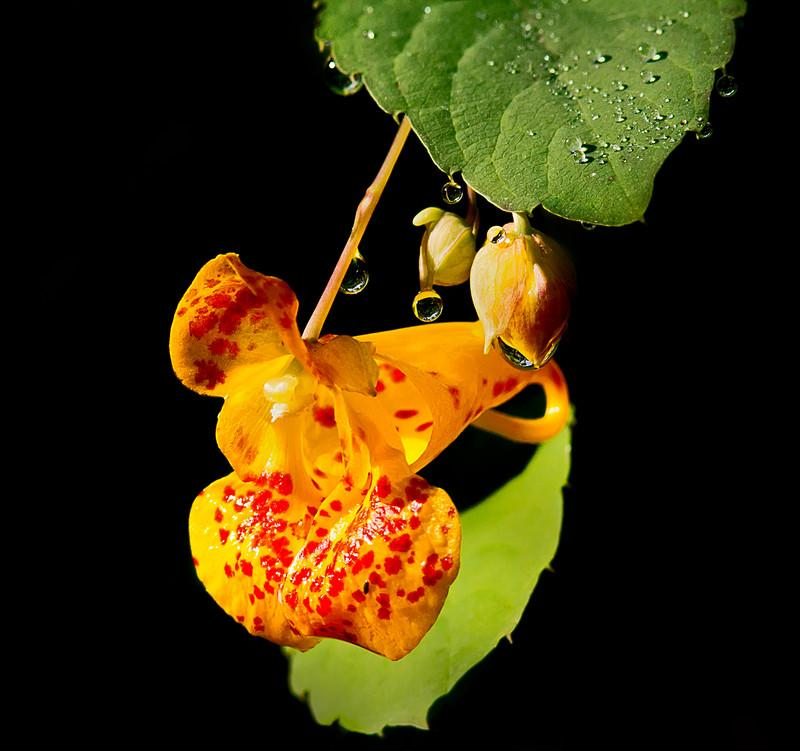 How Wild Seeds Disperse | EcoParent magazine