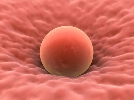 image of a human egg, pink in colour
