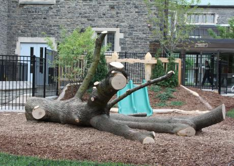 fallen tree acting as a play structure