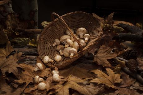 a basket of mushrooms spilling out into the leaves