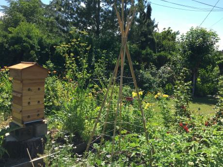 a biodynamic farm with beehive and tomato cage featured